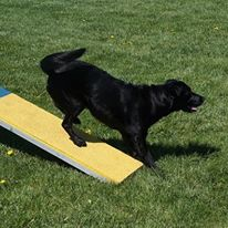 Have you considered competing in Agility?
