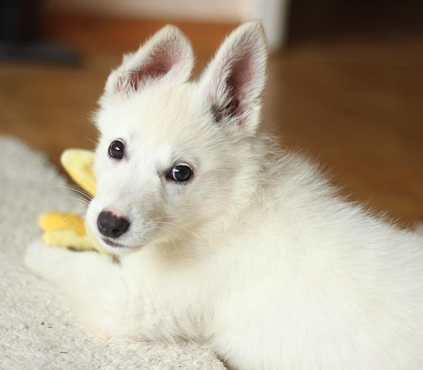 Puppy & Home Companion