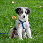 Puppy and Home Companion Class Registration Request